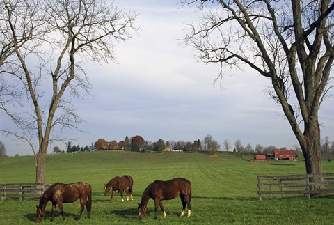 Framed Horses Eating in Pasture Print