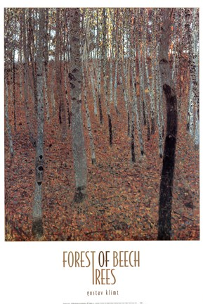Framed Forest of Beech Trees Print