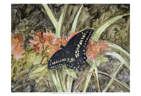 Framed Butterfly in Nature III Print
