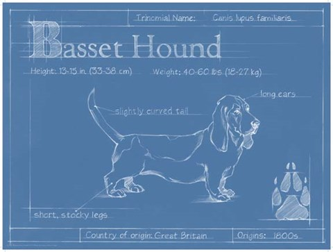Blueprint basset hound fine art print by ethan harper at framed blueprint basset hound print malvernweather Image collections