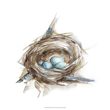 Framed Bird Nest Study II Print