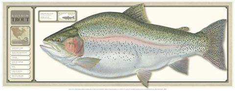 Framed World Record Rainbow Trout Print