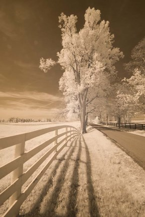Framed Fence, Shadows, & Trees, Kentucky 08 Print