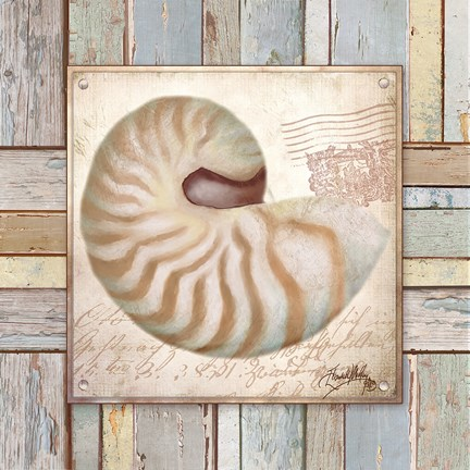 Framed Beach Shell III Print