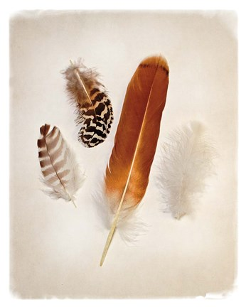 Framed Feather Group I Print