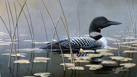 Framed Loon In Reeds Print
