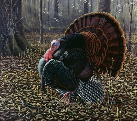 The King Of Spring Wild Turkey Fine Art Print By Wilhelm