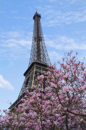 Framed Eiffel Tower with Pink Magnolia Tree Print