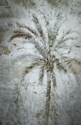 Framed Palm on Concrete Print