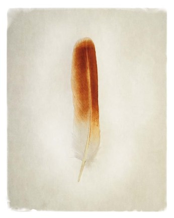 Framed Feather II Print
