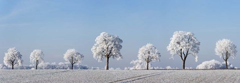 Framed Alley Tree With Frost, Bavaria, Germany Print