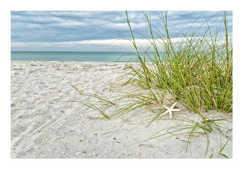 Framed Star Fish and Sea Oats Print