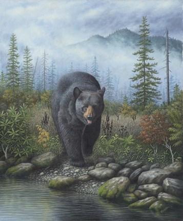 Smoky Mountain Black Bear Fine Art Print By Robert Wavra