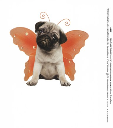 Framed Wings - Pug Print