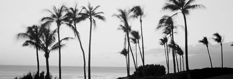 Framed Silhouette of palm trees at dusk, Hawaii Print