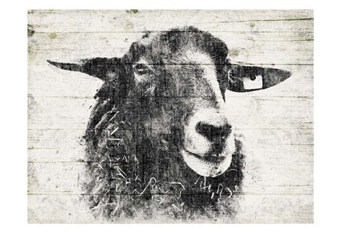 Framed Vintage Sheep Print