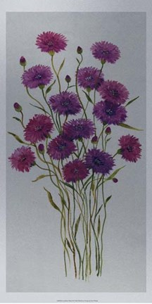 Framed Cornflower Patch II Print
