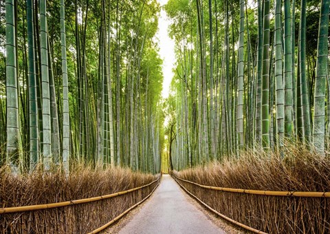 Framed Bamboo Forest, Kyoto, Japan Print