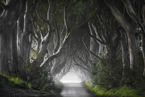 Framed Dark Hedges Print