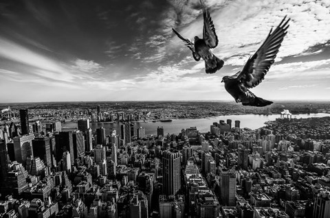 Framed Pigeons On The Empire State Building Print
