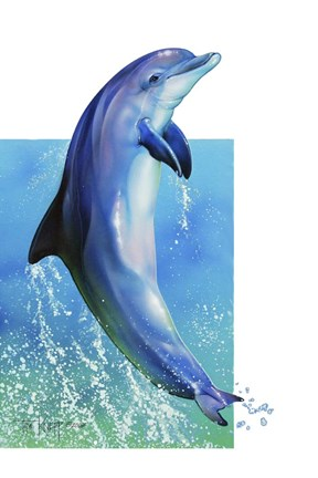 Dolphin Pictures To Print