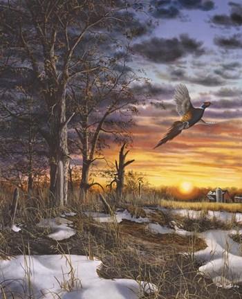 Autumn Ringneck Fine Art Print By Jim Hansel At