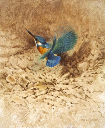 Framed Kingfisher Study Print