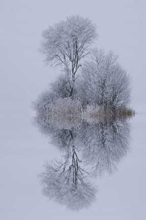 Framed Winter Stillness Print