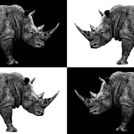 Framed Safari Profile Collection - Rhinos II Print