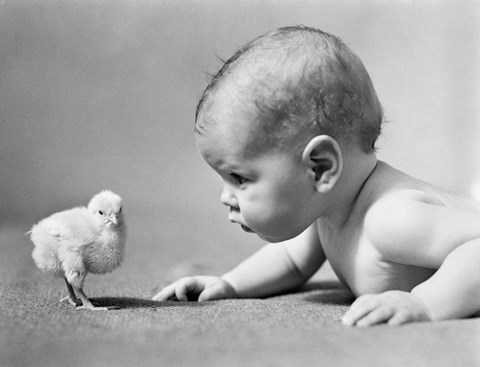 Framed 1930s Human Baby Face To Face With Baby Chick Print