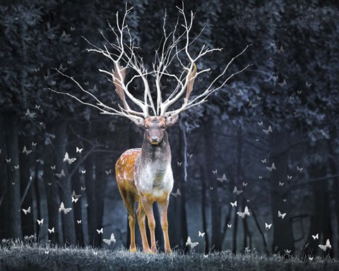 Magical Deer Fine Art Print By Ata Alishahi At