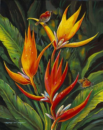 Framed Heliconia Augusta Print