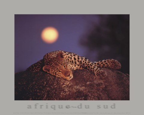 Framed Leopard with Rising Moon Print
