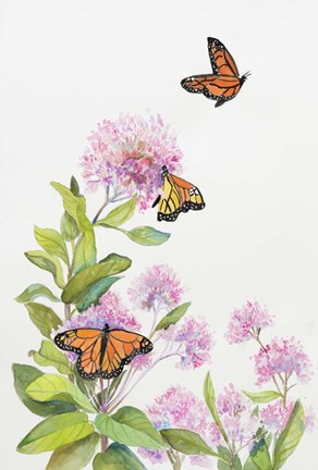 Framed Milkweed and Monarch Butterflies Print