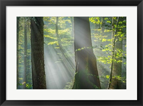 Framed Shower of Light Print