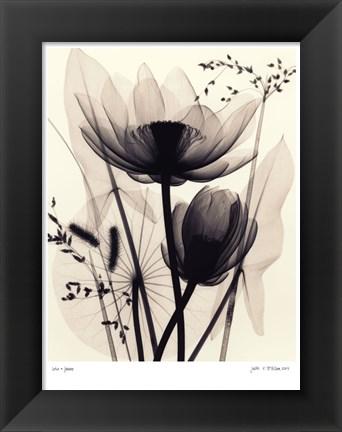 Judith mcmillan Lotus and Grasses fulcrumgallery.com