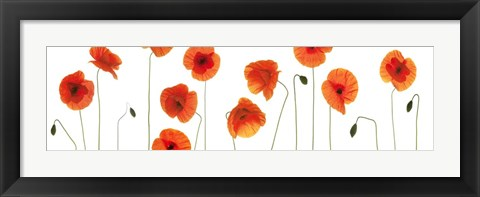 Framed Row of Poppies on White Print